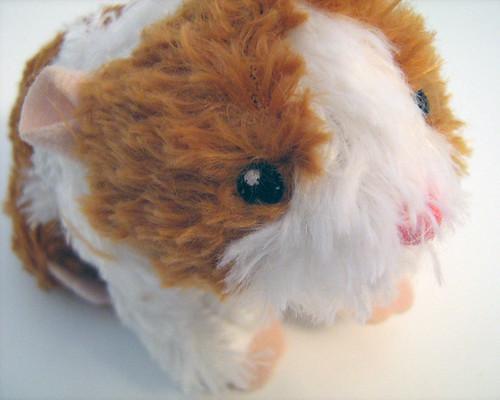 freddie the hamster