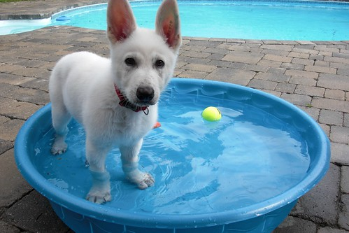 Aug. 11-Happy's new wading pool-4