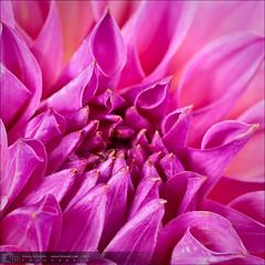 Flores-20090809-130021