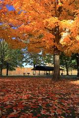 Fall Picnic Area (player_pleasure) Tags: autumn tree fall nature leaves canon sigma elements highbanksmetropark