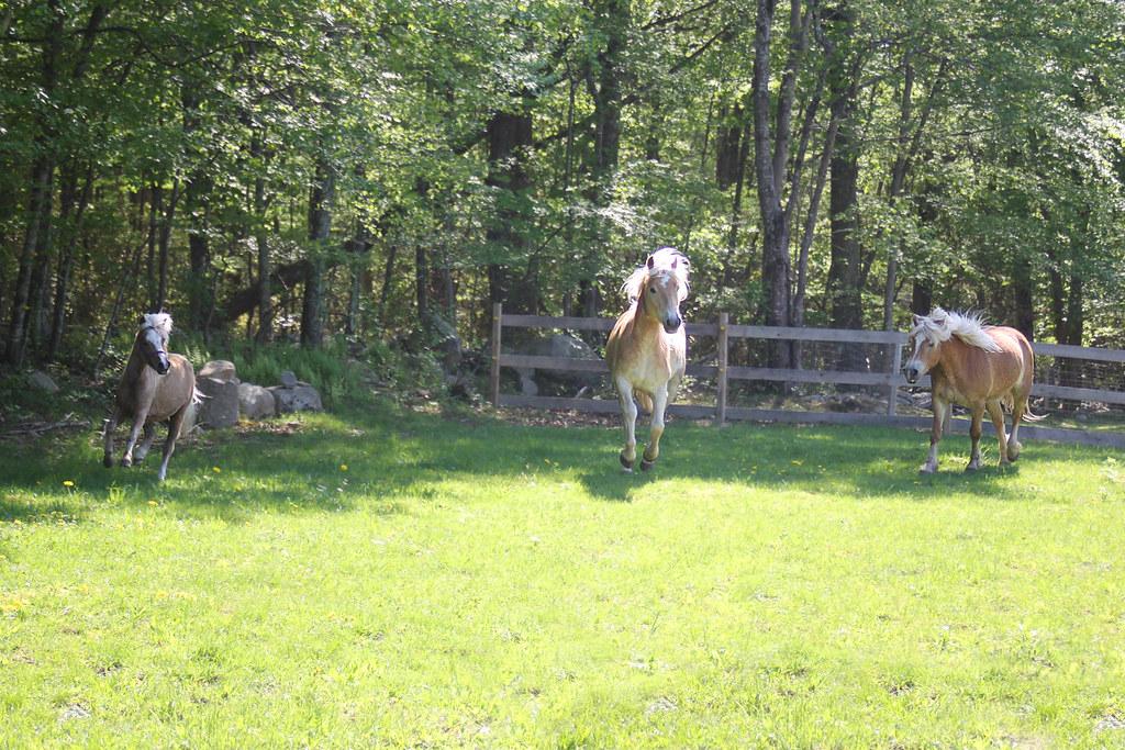 horses 186x