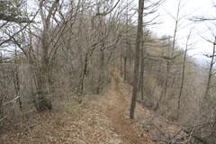 今倉山の山頂の直下の道