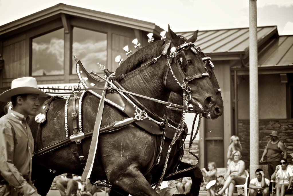 Percheron Team