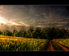 Landscape Moods - 04. Juni Explore :) THX!!! (Sam ) Tags: sky field clouds forest canon landscape deutschland yahoo flickr sam wheat feld wolken eifel explore lane landschaft wald hdr feldweg bitburg rheinlandpfalz hochsitz weizen greatphotographers hermesdorf rhinelandpalatinate rockpaper realmagic koosbsch hotonflickr flickrclassique wismannsdorf daarklands bestcapturesaoi sailsevenseas sailsevenseasmaster sbfmasterpiece mygearandme mygearandmepremium mygearandmebronze greaterphotographers artistoftheyearlevel3 artistoftheyearlevel4 aboveandbeyondlevel4 ayrphotoscontestwildsilent aboveandbeyondlevel1 flickrstruereflection1 flickrstruereflection2 flickrstruereflection3 flickrstruereflection4 flickrstruereflection5 artistoftheyearlevel5 vqnight artistoftheyearlevel7 artistoftheyearlevel6 masterclasselite aboveandbeyondlevel2 aboveandbeyondlevel3