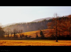 Our Farm in the Morning (Tracey Tilson Photography) Tags: morning trees our winter mountains fog landscape nc nikon farm north foggy hills pasture western carolina february 2009 picnik d90 pregamewinner pregamewinnermay10