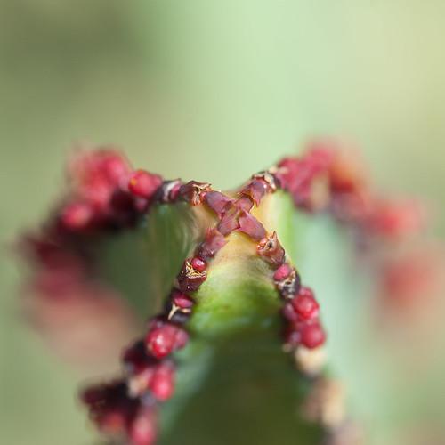 Macro en el Jardín Canario