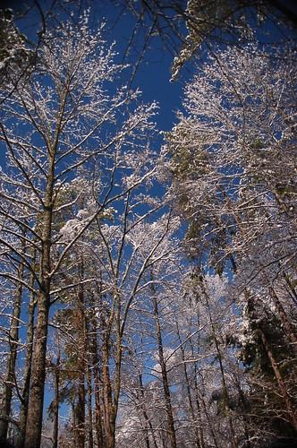 Snow Day '09 156