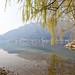 Lago di Lecco e salice piangente