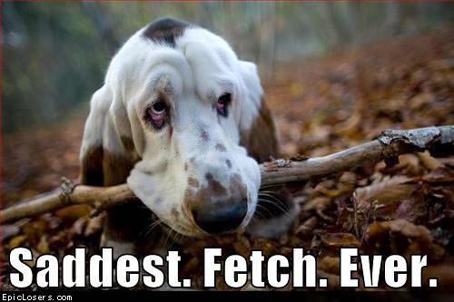 Saddest Fetch Ever - LOLDogs