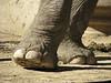 Pies de Gigante (i-nacho) Tags: two elephant feet argentina zoo buenosaires ground dos patas pies elefante tierra arrugas pelitos totalphoto