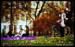 Springtime in Copenhagen (Kirsten M Lentoft) Tags: park flowers girls people man love coffee bike copenhagen denmark women crocus picnik bej worldbest betterthangood kirstenmlentoft