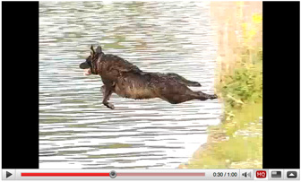Casio FC100 slow motion clip of a dog jumping into a river