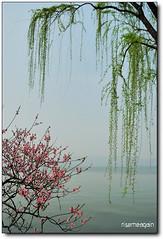 When pink meet green\ (risemeagain) Tags: china pink green spring nikon westlake hangzhou naturesfinest 1835mm d80 mywinners citrit risemeagain vosplusbellesphotos