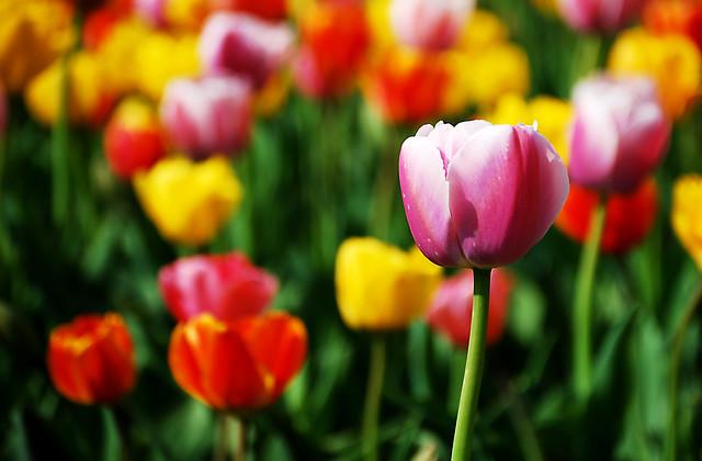 صور اجمل حدائق الورد 2013 ، صور حدائق الزهور 2013 ، صور حدائق ورد 2013 3473750883_6015b51649_z.jpg