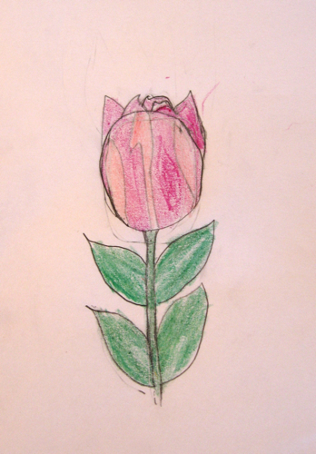 Tulip--Nature Journal by Zippy age 9