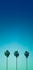 Tropical Getaway (ohlin) Tags: blue trees sky aqua palm gradient
