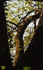 DSC_2770 (ronnyfaessler) Tags: schweiz switzerland outdoor natur fluss rhein ronny naturschutzgebiet ffentlich fssler wwwverreisch httpronnyfaesslerspaceslivecom ronnyfaessler httpronnyfaesslerblogspotcom 090425naturschutzgebietbearbeitet
