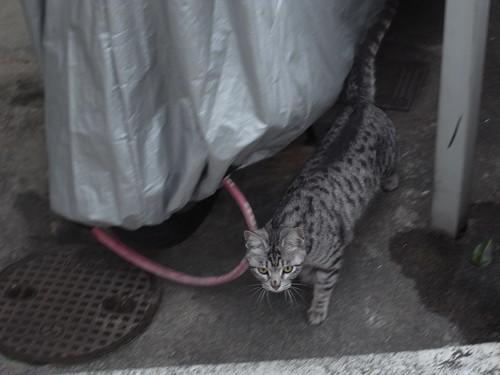 Today's Cat@20090426
