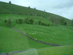 sheep dot the landscape