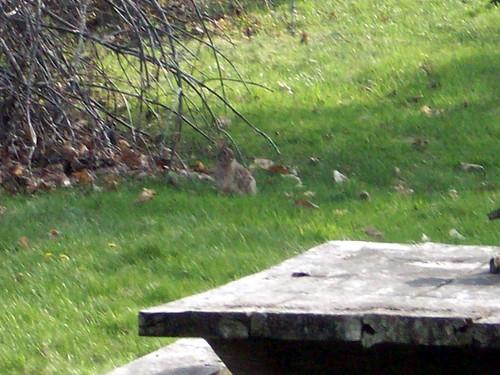 Bunny_43009