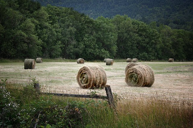 Hay field on the Old Coos Bay Wagon Rd, Douglas County Oregon