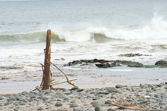 Drift Wood (davy_alpha_male) Tags: sea beach sand tide wave driftwood