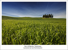 Blue and green (Salva del Saz) Tags: blue italy green forest canon landscape eos spring italia raw angle little wheat wide val filter lee single tuscany fields cypress siena toscana valdorcia ultra 1022mm minimalist 1022 dorcia cipressi sanquiricodorcia efs1022 circularpl naturallook 40d torrenieri salvadordelsaz salvadelsaz 06ndgradhard