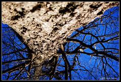 Complications (Cygnus~X1 - Visions by Sorenson) Tags: park blue sky usa tree nature canon outdoors eos spring branch branches indiana bark 2009 monon whitecounty 50d ef28135mmf3556isusm craigsorenson