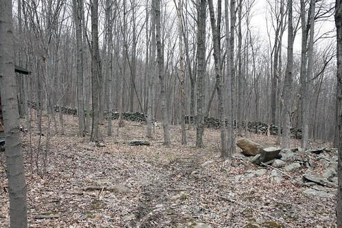 070 Woods