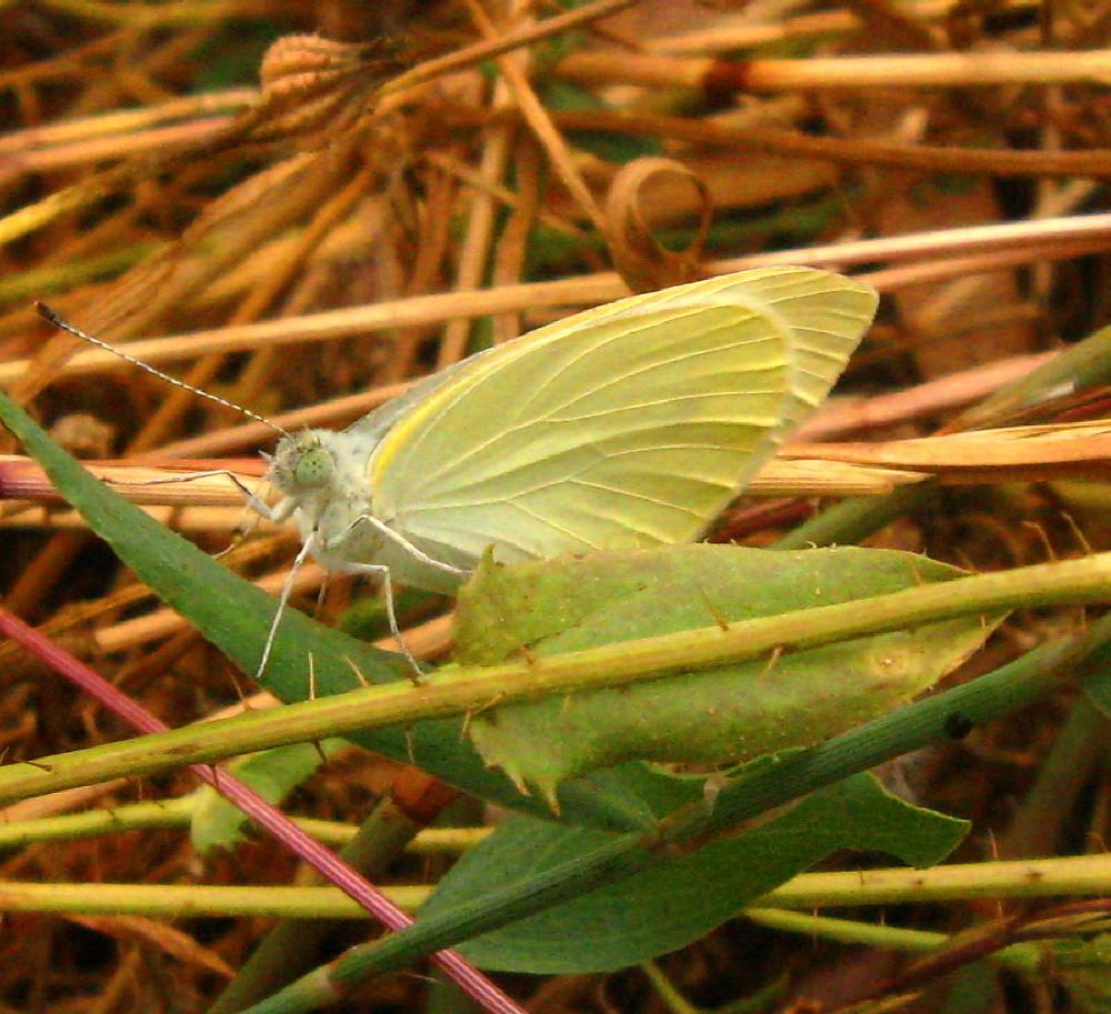 20-05-2011-butterfly2