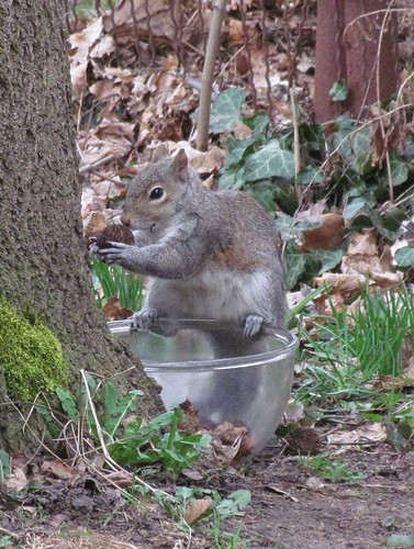 Squirrel Trick or Treat