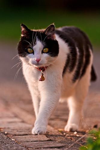 [フリー画像] 動物, 哺乳類, 猫・ネコ, 201106151700