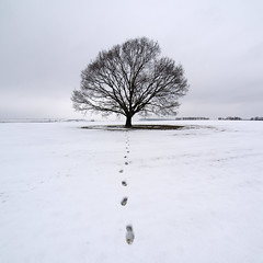 February Calmness (Paul Petruck) Tags: winter snow tree nature landscape symmetry 1000views 500x500 seenintheinterestingnessarchives thesecretlifeoftrees winner500