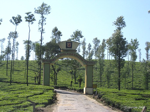 Sholayar & Kallyar Estate