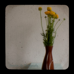 Yellow Buttercup TTV Photograph