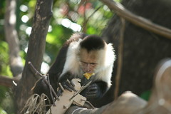 Monkeys Need More Complex Toys