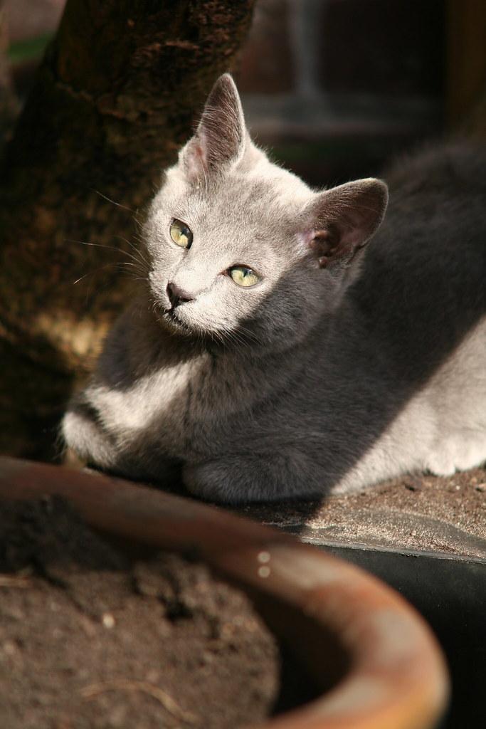 Kittens of Pegusha - Page 3 3373210037_4b1168baea_b