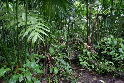 Jungle vegetation...