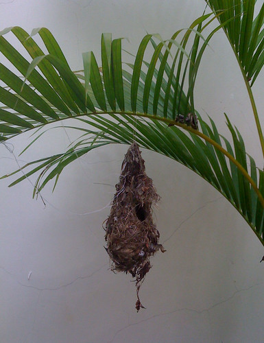 Bird's Nest in my house!