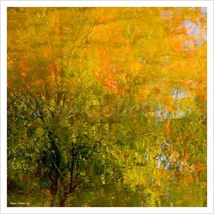 Awakening...!!! (Denis Collette...!!!) Tags: trees wild canada reflection tree reflections river photo spring quebec photos rivire safari reflet arbres qubec rivers walden impressions collette arbre reflets printemps photosafari impression impressionist denis sauvages thoreau sauvage impressionists rivires portneuf wildrivers wildriver impressionistes impressionniste deniscollette pontrouge riviresauvage world100f theenchantedcarousel lesamisdupetitprince riviressauvages photossafari sensationalphoto visionqualitygroup