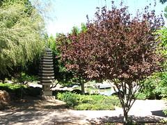 Japanese Friendship Garden in Phoenix, Arizona