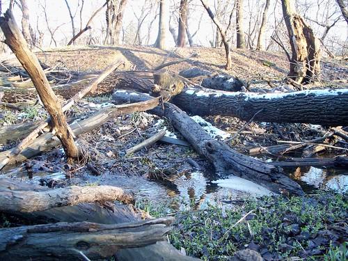 3.29.2009 River Grove (2)