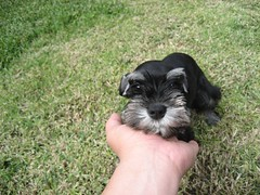 Truman was so small when we first got him. (03/14/2009)