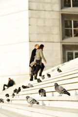 The birds are watching (Olivier H) Tags: morning sky building bird stairs work office bureau outdoor pigeon travail briefcase extrieur oiseau escalier immeuble matin climbup monter portedocument