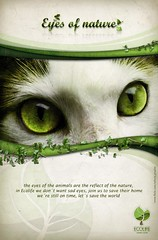 eyes of nature (Wilson Cceres ) Tags: world plants naturaleza nature animal fauna cat design eyes flora colombia graphic you conejo gatos advertisement ojos wilson animales neko diseo botanica cato caceres enviroment campaa convocatoria ecologica eyesores ecolife
