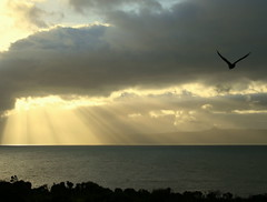 Imagine (pondlife*) Tags: sea sky sun bird nature clouds freedom fly explore imagine rays shineon applecross mywinners platinumphoto