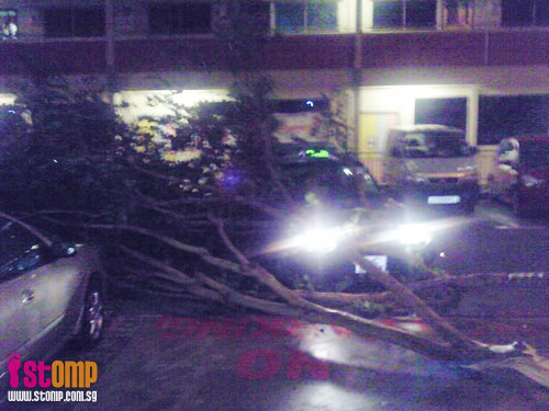 Storm winds whip S'pore: Just look at the damage caused(1)-010