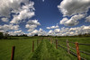 England: Northamptonshire - Fenced In (Tim Blessed) Tags: uk sky nature clouds landscapes countryside spring scenery sheep fields pastures singlerawtonemapped