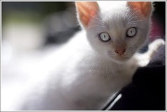 Yoshi The Cat (Iaki Mateos) Tags: beautiful cat eyes kitten kitty ojos gato yoshi anawesomeshot aplusphoto