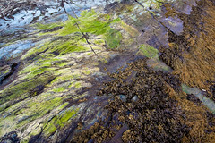 The colors of low tide (TAKleven) Tags: ocean photowalk havet fjre sj ladestien ringvebukta ifjra fototreff not25 fototreffakam fototreffakamnotrondheimmai2009